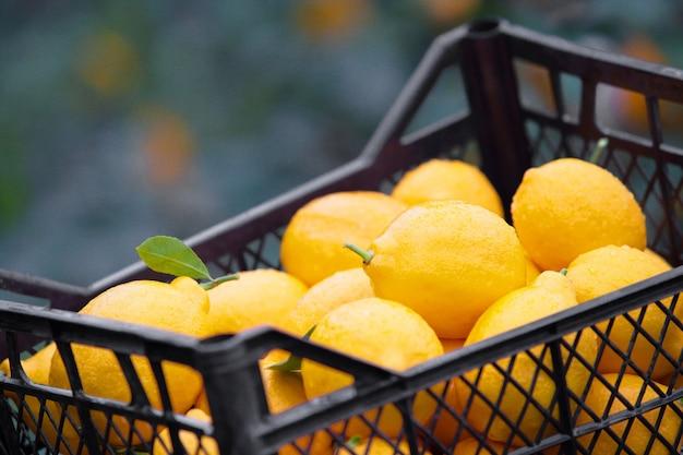 Caixa de limão amarelo.