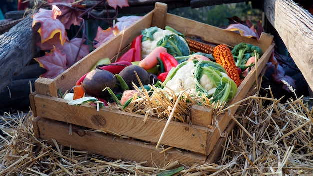 Caixa de madeira com legumes frescos da exploração agrícola em uma palha. conceito de colheita de outono