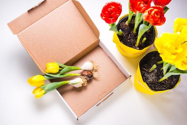 Caixa de papelão branca decorada com tulipas amarelas frescas