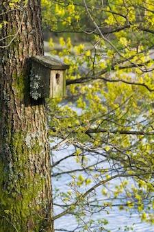 Caixa de pássaro de ninho muito antiga coberta de líquen e musgo, pendurada em uma árvore na primavera, com botões verdes