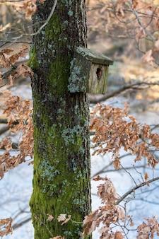 Caixa de pássaro de ninho muito antiga coberta de líquen e musgo, pendurado em uma árvore na primavera
