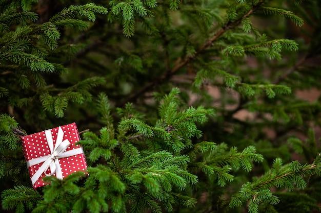 Caixa de presente vermelha de natal com laço em um galho de árvore do abeto verde