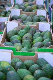 Caixas com abacate