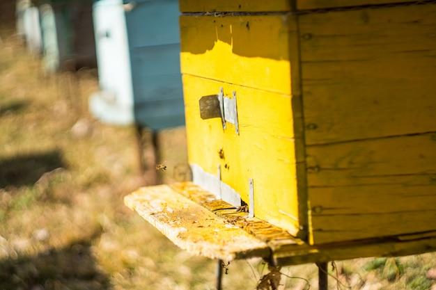 Caixas de colméia de madeira amarelas e azuis