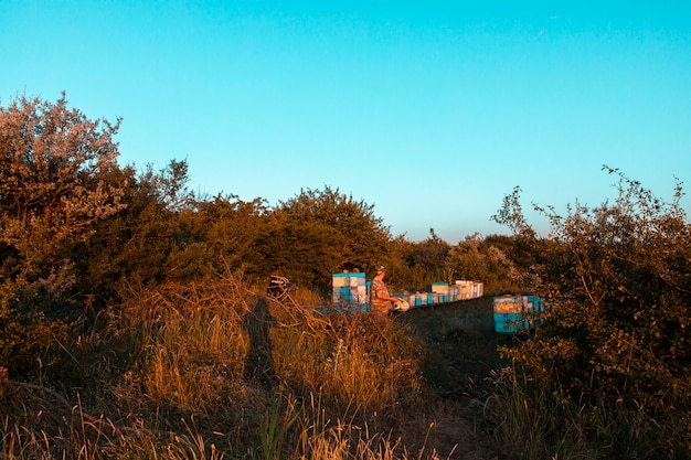 Caixas de colmeias de madeira e coloridas na natureza