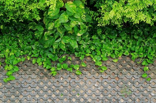 Calçada de pedra relvado com plantas verdes vibrantes