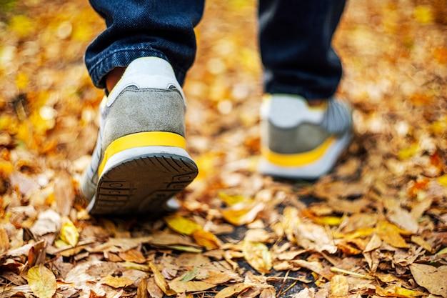Calçada em folhagem caída, outono