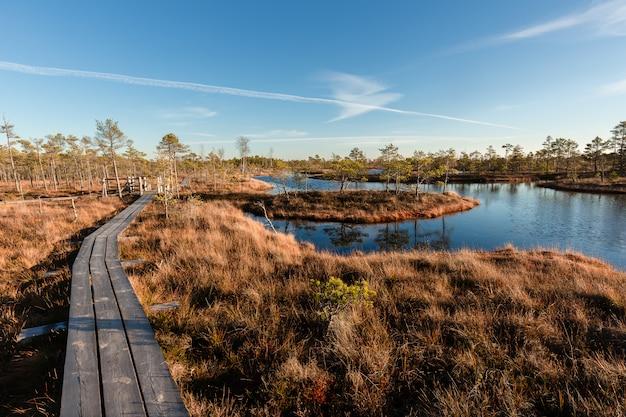 Calçadão de pântano levantado. kemeri national park, na letónia. verão.
