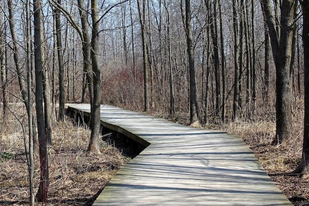 Calçadão em uma floresta cercada por muitas árvores altas e sem folhas