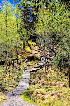Calçadão em uma floresta no norte da europa