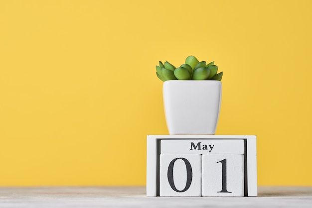 Calendário de blocos de madeira com data de 1º de maio e planta suculenta em vaso em fundo amarelo. conceito do dia do trabalho