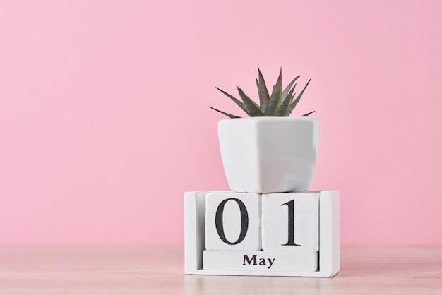 Calendário de blocos de madeira com data de 1º de maio e planta suculenta em vaso em fundo amarelo
