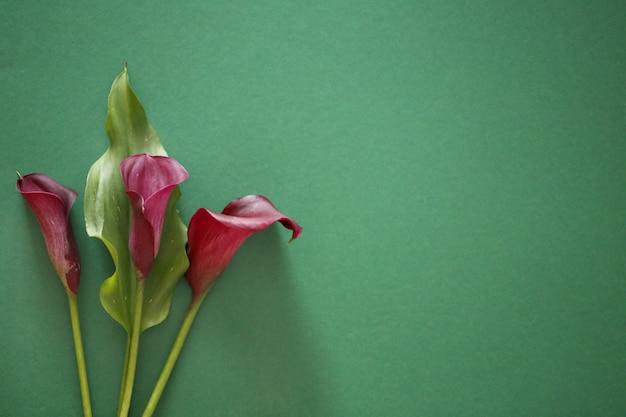 Calla marrom escuro flores com folhas verdes