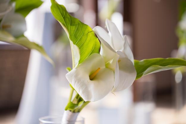 Callas brancos em um vaso de vidro closeup