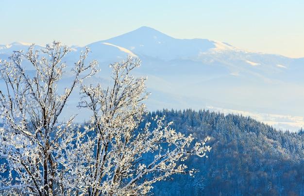 Calma paisagem montanhosa de inverno com geada e árvores cobertas de neve na frente