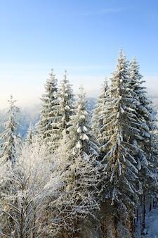Calma paisagem montanhosa de inverno com geada e pinheiros cobertos de neve e alguma queda de neve