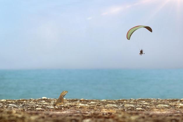 Calotes versicolor e paramotor à beira-mar.