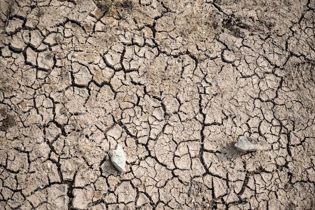 Cama de lago seco