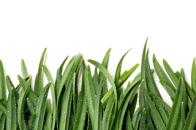 Cama plana de grama verde molhada