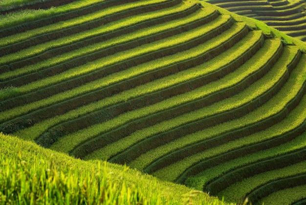 Camada de campos de arroz em terraços de mu cang chai, yenbai, vietnam. paisagens do vietnã.