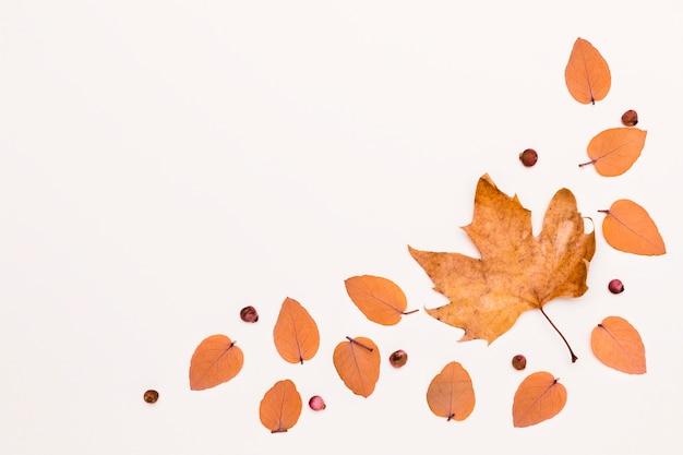 Camada plana com variedade de folhas de outono