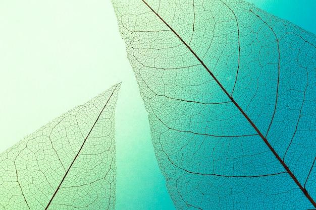 Camada plana da lâmina de folhas transparentes