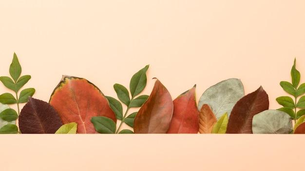 Camada plana de folhas coloridas de outono