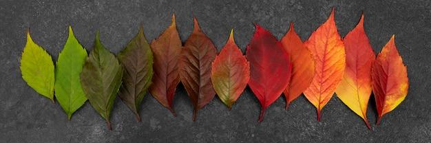 Camada plana de folhas de outono lindamente coloridas