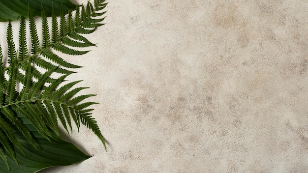 Camada plana de folhas de plantas tropicais com espaço de cópia
