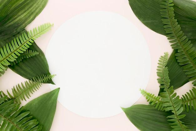 Camada plana de folhas e samambaias com espaço de cópia
