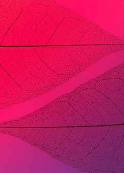 Camada plana de folhas transparentes com matiz colorido