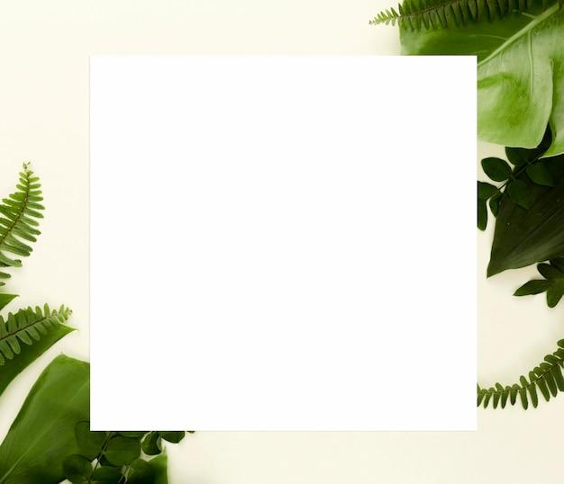 Camada plana de samambaias com folha de monstera e outras folhas