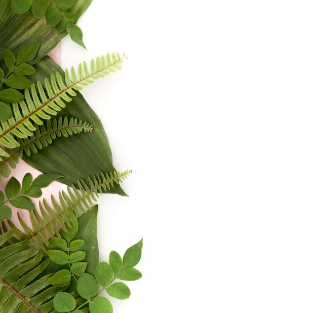 Camada plana de samambaias e folhas com espaço de cópia