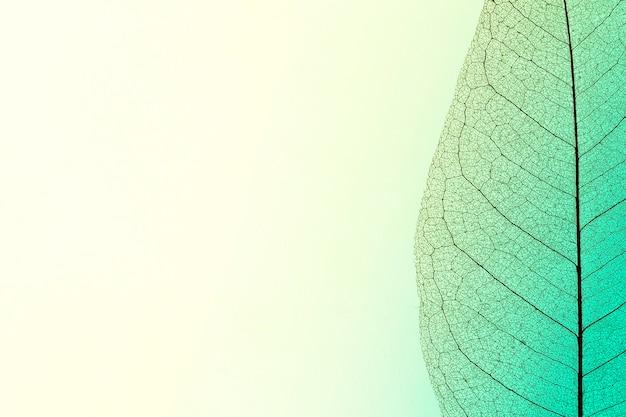 Camada plana de textura de folha transparente