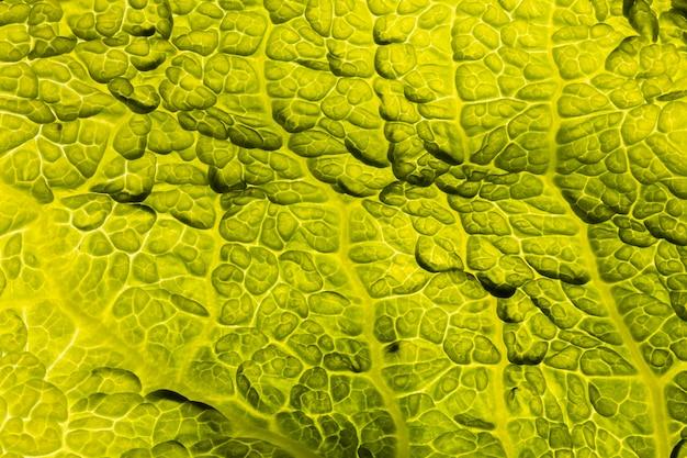 Camada plana de textura de folha verde
