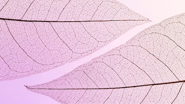 Camada plana de textura de folhas transparentes com matiz colorido