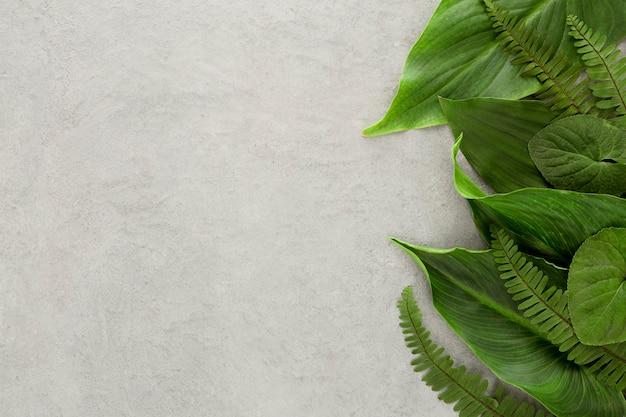 Camada plana de variedade de folhas com espaço de cópia