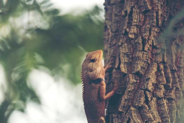 Camaleão na árvore