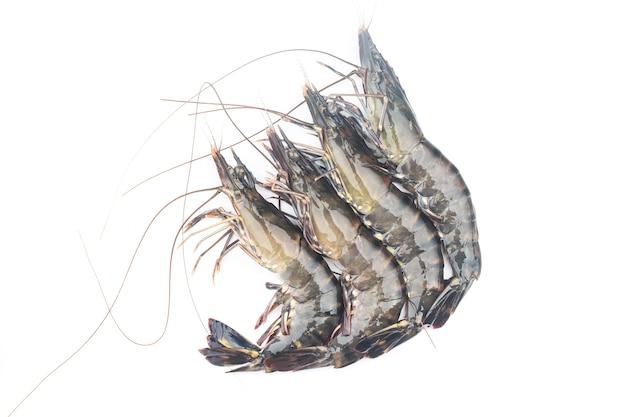 Camarão fresco ou camarão em fundo branco. camarões crus isolados no fundo branco.