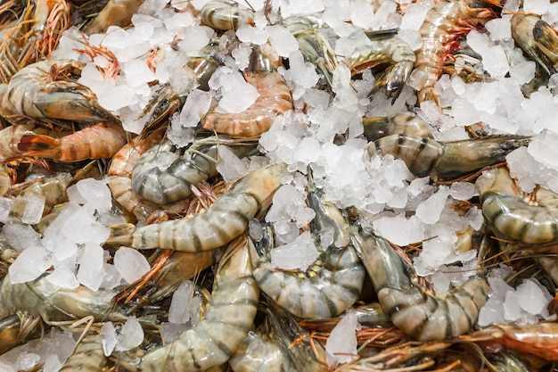 Camarões tigre no gelo, crus frescos inteiros e gelados, no mercado de peixes