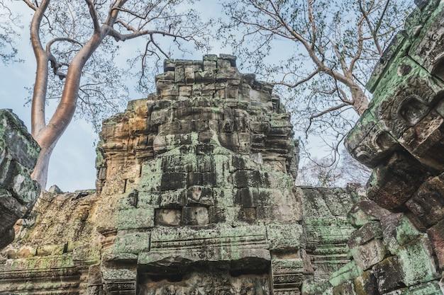 Camboja angkor wat ta prohm templo invasor de tumbas raízes de árvores ruínas templos de angkor ta prohm siem reap c ...