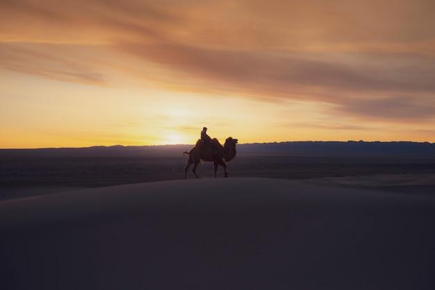 Camelo atravessando as dunas de areia no nascer do sol, deserto de gobi, mongólia.