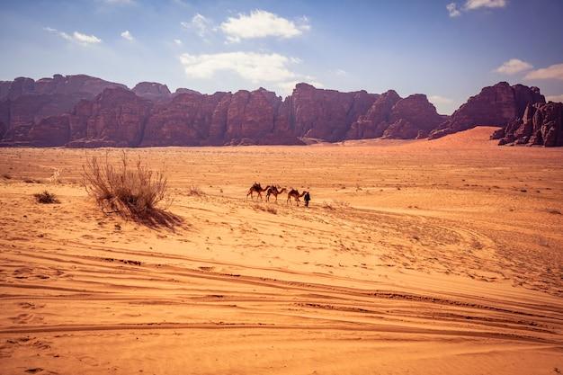 Camelo no rum do barranco