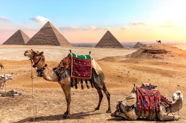 Camelos perto das pirâmides, belas paisagens egípcias.