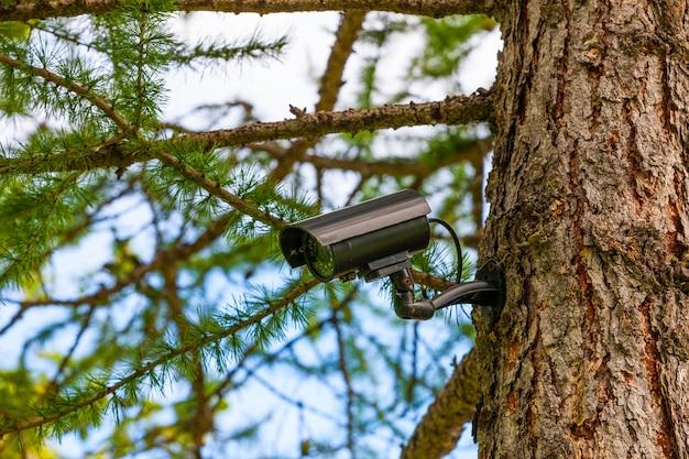 Câmera de vigilância na árvore