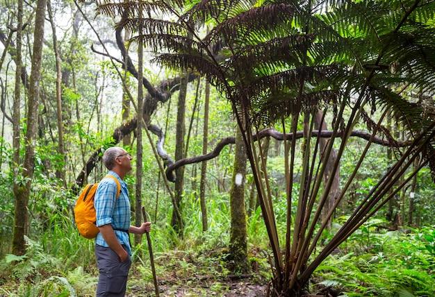 Caminhada na selva na ilha do havaí