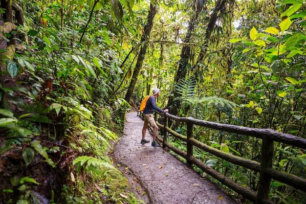 Caminhada na selva tropical verde, costa rica, américa central