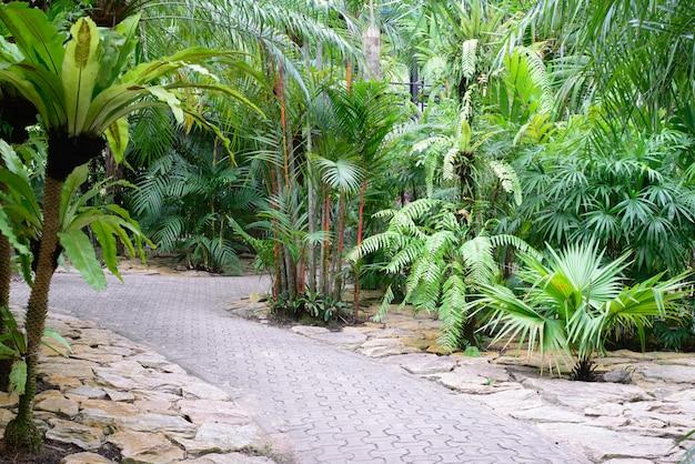 Caminhada trilha na floresta tropical verde exuberante.