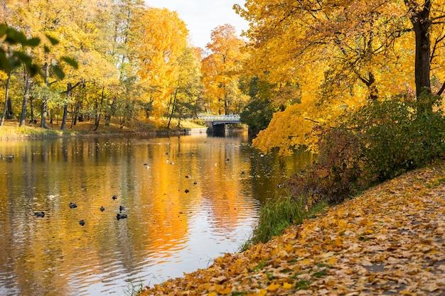 Caminhando em um parque no outono, algumas árvores douradas. foto de alta qualidade
