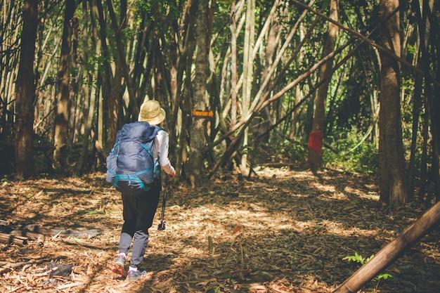Caminhando o grupo na floresta, viaje na montanha para acampar no dia ensolarado com efeito da cor.